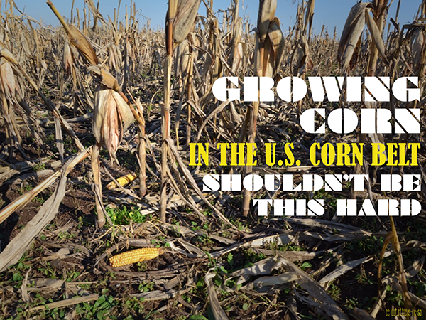 Growing Corn in the US Corn Belt Shouldn't Be This Hard
